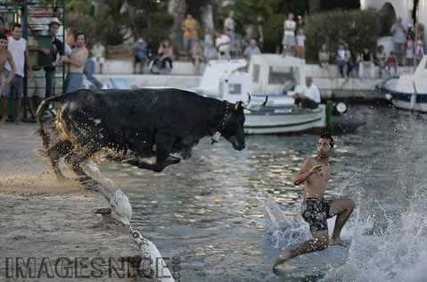 Fotos-chistosas-toros